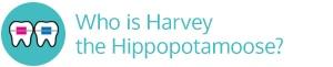 Harvey Hippopotamoose vertical hover Marda Loop Braces Calgary AB