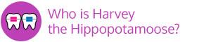 Harvey vertical button Marda Loop Braces Calgary AB